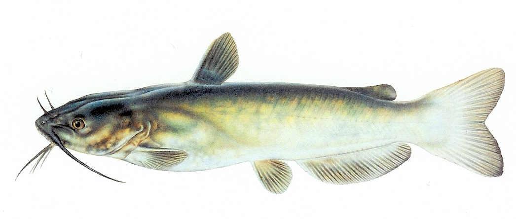 ozawa-fish-in-the-pond-dating-service-campisi